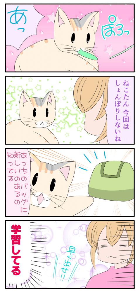 学習する猫の漫画